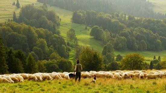 品质造就实力,蓓康僖引领纯羊时代